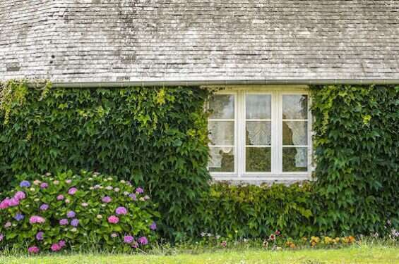 Country house covered with creepers in Mayenne (Pays de la Loire, France)